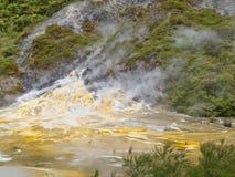 Πράσινο δασικό γεωθερμικό geyser Orakei Korako NZ Στοκ Εικόνες