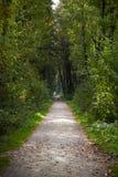 Πράσινο δασικό μονοπάτι Στοκ εικόνες με δικαίωμα ελεύθερης χρήσης