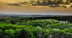 Πράσινο δασικό πανόραμα στοκ φωτογραφία με δικαίωμα ελεύθερης χρήσης