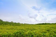 Πράσινο δασικό υπόβαθρο δέντρων Στοκ φωτογραφίες με δικαίωμα ελεύθερης χρήσης