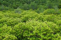 Πράσινο δασικό υπόβαθρο δέντρων Στοκ Φωτογραφίες