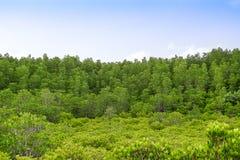 Πράσινο δασικό υπόβαθρο δέντρων Στοκ Εικόνες
