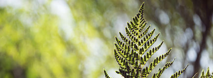 Πράσινο δασικό υπόβαθρο φύλλων περιβάλλοντος στοκ φωτογραφία