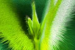 Πράσινο αφηρημένο ζωηρόχρωμο υπόβαθρο λουλουδιών διανυσματική απεικόνιση