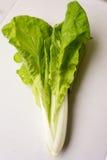 πράσινο λαχανικό Στοκ εικόνες με δικαίωμα ελεύθερης χρήσης