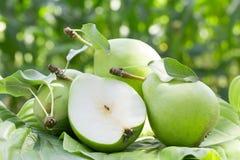 πράσινο αχλάδι Στοκ εικόνες με δικαίωμα ελεύθερης χρήσης