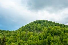 Πράσινο βουνό σε έναν νεφελώδη ουρανό υποβάθρου πράσινος λόφος Δάσος βουνών πράσινο Στοκ φωτογραφίες με δικαίωμα ελεύθερης χρήσης