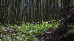 Πράσινο βρύο σε ένα ξύλινο κολόβωμα απόθεμα βίντεο