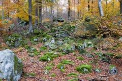 Πράσινο βρύο στις πέτρες στο δάσος φθινοπώρου Στοκ Εικόνες