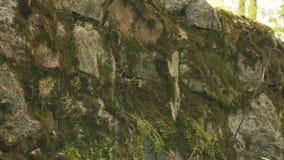 Πράσινο βρύο στον παλαιό τοίχο πετρών απόθεμα βίντεο