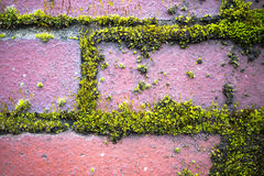 Πράσινο βρύο στον τούβλινο τοίχο Στοκ Φωτογραφία
