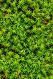 Πράσινο βρύο στο δάσος Στοκ Εικόνες