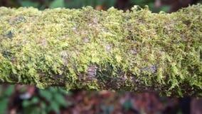 πράσινο βρύο απόθεμα βίντεο