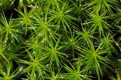 Πράσινο βρύο Στοκ Φωτογραφία