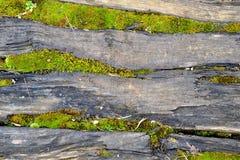 Πράσινο βρύο στοκ εικόνα με δικαίωμα ελεύθερης χρήσης