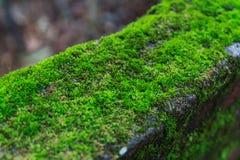 πράσινο βρύο Στοκ φωτογραφία με δικαίωμα ελεύθερης χρήσης