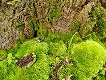 πράσινο βρύο Στοκ Φωτογραφίες