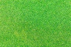 Πράσινο γκολφ χλόης Στοκ Φωτογραφία