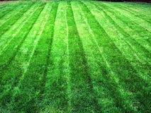 Πράσινο γρασίδι χλόης χορτοταπήτων στοκ εικόνες με δικαίωμα ελεύθερης χρήσης