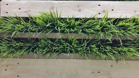Πράσινο γυαλί στο ξύλινο καλάθι Στοκ φωτογραφία με δικαίωμα ελεύθερης χρήσης