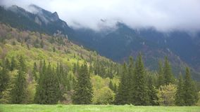 Πράσινο δάσος, άνοδος ομίχλης επάνω στα υψηλά βουνά, τοπίο άνοιξη φιλμ μικρού μήκους