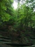 Πράσινο δάσος, Κριμαία 2017 στοκ εικόνα
