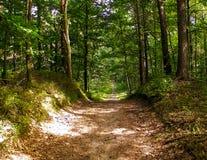 Πράσινο δάσος στην ηλιόλουστη ημέρα στοκ φωτογραφίες