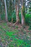 Πράσινο δάσος την άνοιξη Στοκ φωτογραφία με δικαίωμα ελεύθερης χρήσης