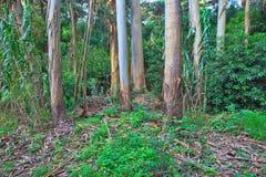 Πράσινο δάσος την άνοιξη Στοκ φωτογραφίες με δικαίωμα ελεύθερης χρήσης
