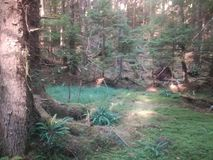 Πράσινο δάσος στοκ εικόνες