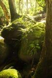 Πράσινο δάσος στοκ φωτογραφία με δικαίωμα ελεύθερης χρήσης