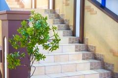 Πράσινο δέντρο από τα σκαλοπάτια Τα σκαλοπάτια καλύπτονται με τα κεραμικά κεραμίδια στοκ εικόνα με δικαίωμα ελεύθερης χρήσης