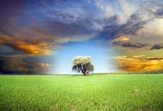 Πράσινο δέντρο και σκοτεινός ουρανός. Στοκ Φωτογραφίες