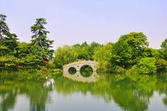 πράσινο δέντρο λιμνών στοκ φωτογραφίες