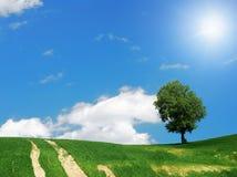 πράσινο δέντρο πεδίων Στοκ εικόνα με δικαίωμα ελεύθερης χρήσης