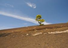 πράσινο δέντρο πεύκων Στοκ εικόνα με δικαίωμα ελεύθερης χρήσης