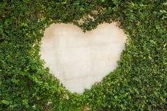 Πράσινο δέντρο στον τοίχο με το διάστημα μορφής καρδιών Στοκ Εικόνες