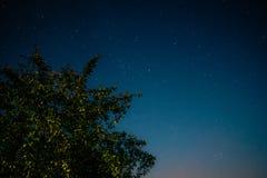 Πράσινο δέντρο στο υπόβαθρο του νυχτερινού ουρανού στοκ εικόνες