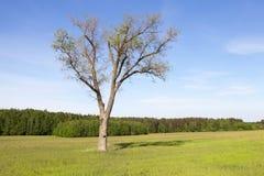 πράσινο δέντρο χλόης Στοκ εικόνα με δικαίωμα ελεύθερης χρήσης