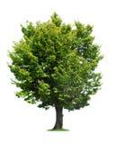 Πράσινο δέντρο στοκ φωτογραφία με δικαίωμα ελεύθερης χρήσης
