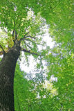 πράσινο δέντρο Στοκ εικόνες με δικαίωμα ελεύθερης χρήσης