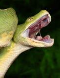 πράσινο δέντρο python Στοκ Φωτογραφίες