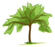 πράσινο ενιαίο δέντρο Διανυσματική απεικόνιση