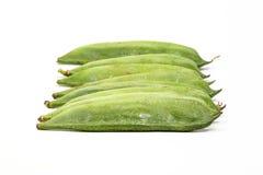 Πράσινο επίπεδο φασόλι Στοκ Εικόνες