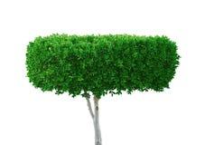 πράσινο λευκό δέντρων Στοκ φωτογραφία με δικαίωμα ελεύθερης χρήσης