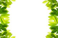 πράσινο λευκό φύλλων ανασκόπησης στοκ φωτογραφία με δικαίωμα ελεύθερης χρήσης