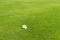 πράσινο λευκό plumeria χλόης λο&ups Στοκ φωτογραφίες με δικαίωμα ελεύθερης χρήσης