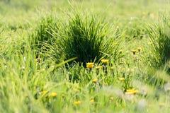 Πράσινο ηλιόλουστο λιβάδι χλόης Στοκ φωτογραφία με δικαίωμα ελεύθερης χρήσης