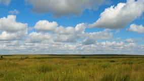 Πράσινο θερινό τοπίο τομέων, timelapse Σύννεφα και τομέας μπλε ουρανού Στοκ Φωτογραφία