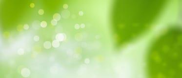 Πράσινο θερινό υπόβαθρο άνοιξης - ηλιόλουστο και διασκέδαση - σύσταση Bokeh pt3 Στοκ εικόνες με δικαίωμα ελεύθερης χρήσης